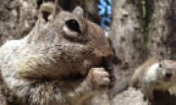 appareil photo do full iphone 4s camera squirrelsx vignette head